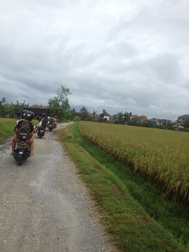 Our scooter team of friends riding through the rice paddy fields